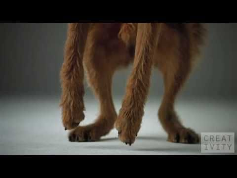 The above is a beautiful slow motion video (1000fps) shot of dogs jumping for dog treats flying through the air. It's actually an advertisement for Pedigre