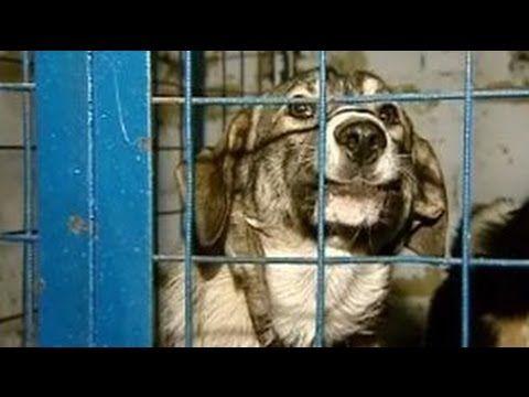 ✔Спасение животных. КОНЦЛАГЕРЬ для собак