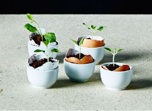 Place half an eggshell in an egg cup and fill with soil. Plant your seedling into this. Plant a few and create a tiny garden on your table display.