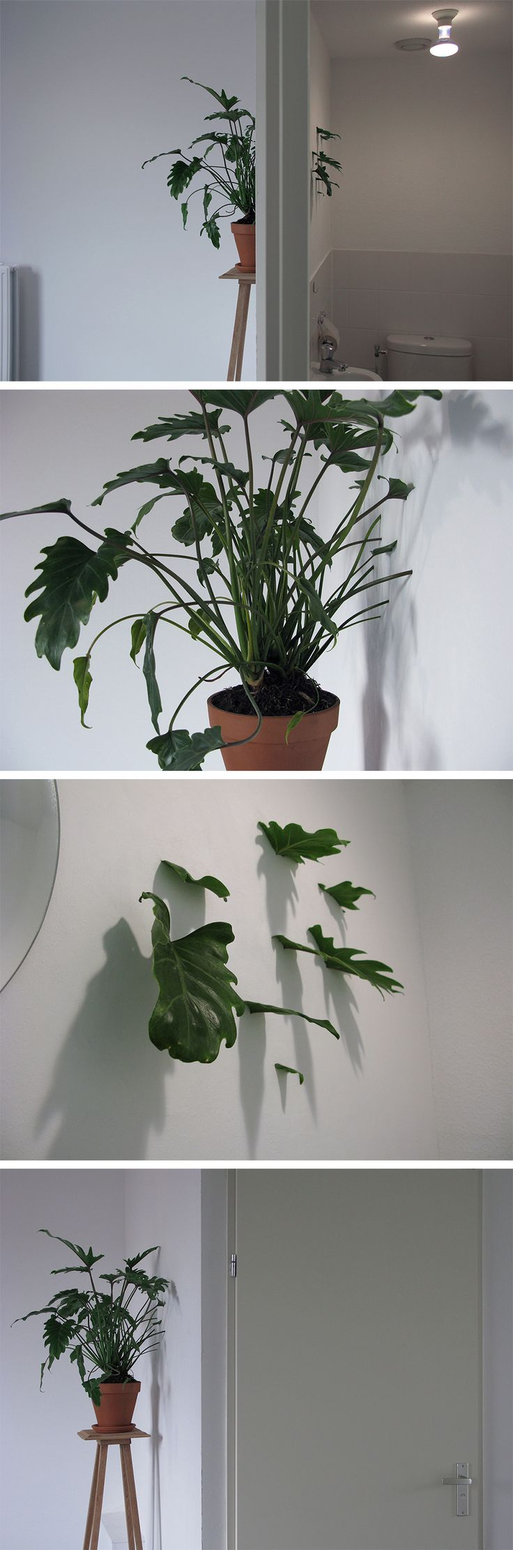 A Live Plant Grows Through Walls in Ruben Bellinkx's Site-Specific Installation