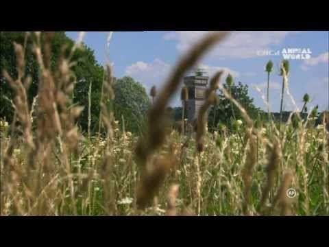 A Vasfüggöny - Az élet határai (HD 1080p) - YouTube