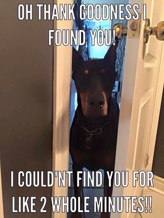 Hahah this is so my Doberman. He follows me everywhere! Every morning I work, he's following me around and stays at my side before I leave. Love that sweetness!
