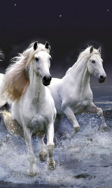 This is an absolutely beautiful pic of white horses galloping through the ocean.  It looks like something from Lord of the Rings.