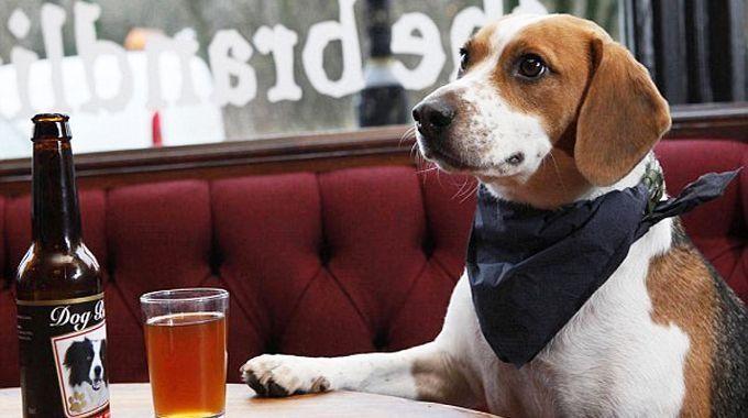 #Chic4Dog #News E' ora di mangiare? Dove andare assieme al tuo cane? Scopri i nostri consigli qui http://blog.chic4dog.com/2014/11/al-ristorante-con-il-tuo-cane-ecco-dove-puoi/
