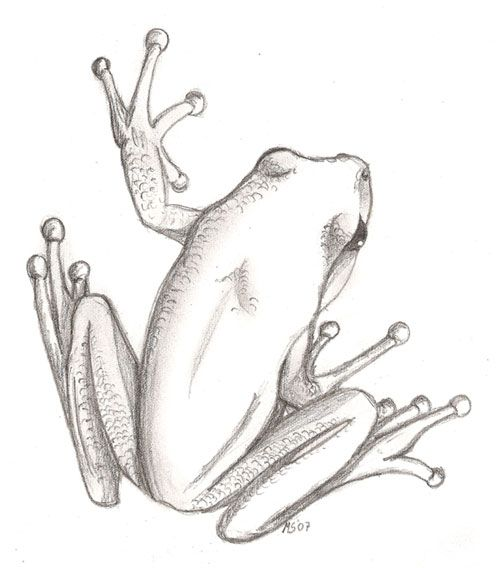 My sister asked me to draw a frog for her to use as tattoo on her ankle. It was to be lightly shaded and no colour. So I drew a tree frog. Thanks to Moose-Stock for the lovely stock photo that I us...