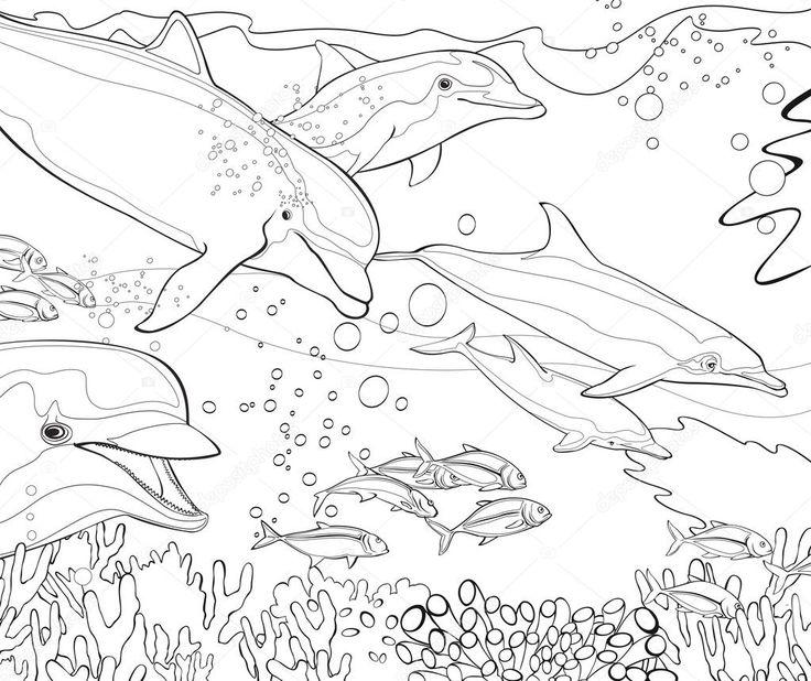 pin von super malvorlagen auf delfine malvorlagen