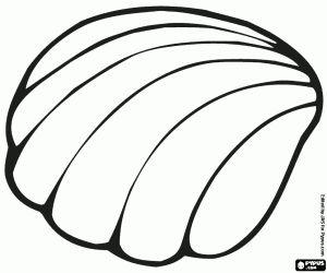 Malvorlagen Eine marine Muschel ausmalbilder Ausmalen