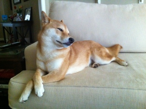 Bitch, please.: Looks All The Tim, Perfect Dogs, Pet, Posts, Shiba Inus, Mimosas, Dogs Puppies Pawprint, Dogs Hana, Animal