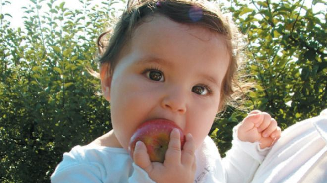 Apple picking is one of the best ways to greet fall. - best apple picking in Chicagoland