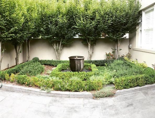 A clients formal herb garden, always a pleasure to work in #formal garden #herbgarden #herbs #buxus #hedges #gardendesign #melbourne #gardenmaintenance #lockedmykeyinthecar #waitingforthesparetoarrive