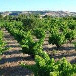 bushvines Smallfry Wines
