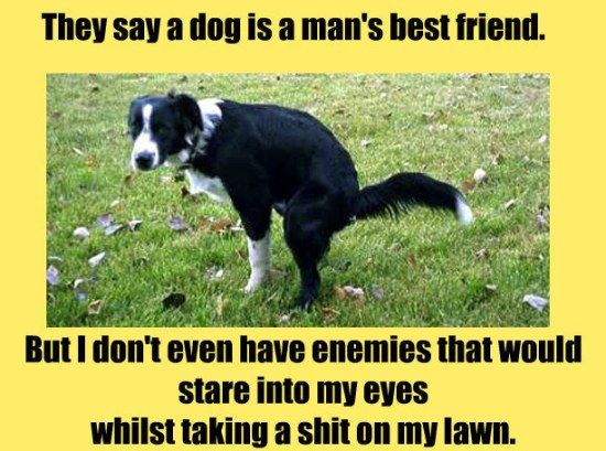 Funny Miss You Friend Meme : Best funny photos images funny stuff ha ha