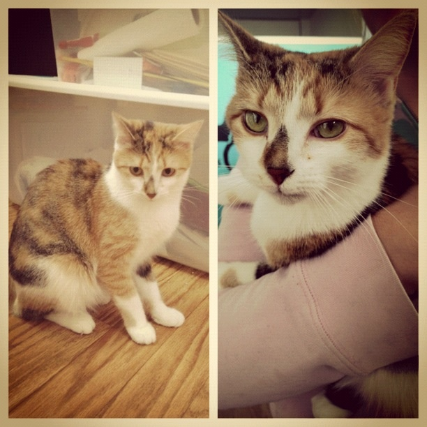 Hermonie, hanging out at the adoption center! Animals