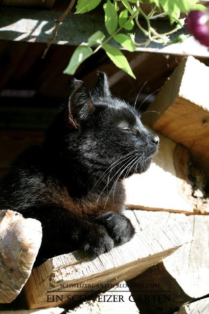 Best 25 cat naps ideas on pinterest cats adorable for Stilvolle gartendeko