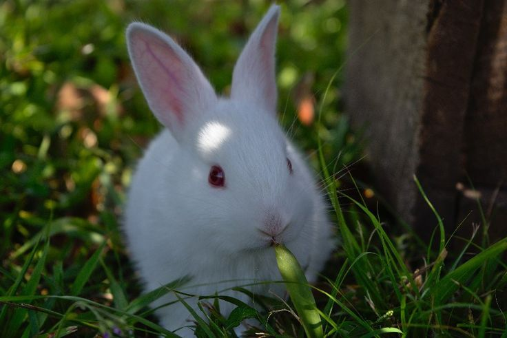 doTERRA Essential Oils for Rabbits