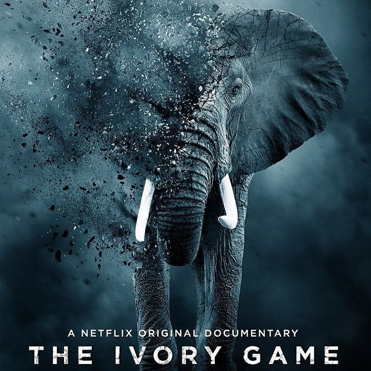 The Ivory Game/Fil Dişi Oyunları: Belgesel sevenlere Fil Dişi Oyunları... Afrikadaki fillerin dişlerine kasteden kaçakçıların ve dişlerine kastedilen fillerin öyküsü. Tanzanya Birleşik Cumhuriyetindeki fillerden sökülüp Çin Halk Cumhuriyetine giden ham fil dişlerinin lüks objelere dönüşüp buradaki multi-milyar dolar ticarete akma hikayesi. Son 5 senede 150.000 den fazla fil bu ticaretin kurbanı oldu. Eğer bu ticaret devam ederse Afrika fili 15 yıl içinde yok olacak. Zira Tanzanya ile…