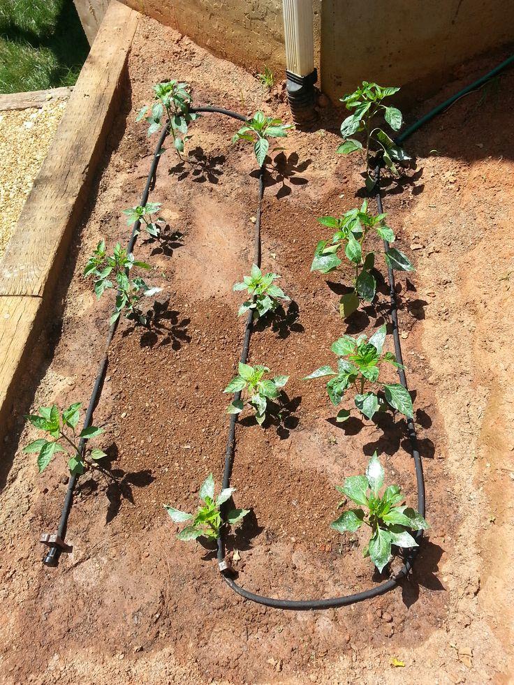 DIY Soaker Hose Irrigation