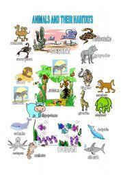english teaching worksheets animal habitats wild animals. Black Bedroom Furniture Sets. Home Design Ideas