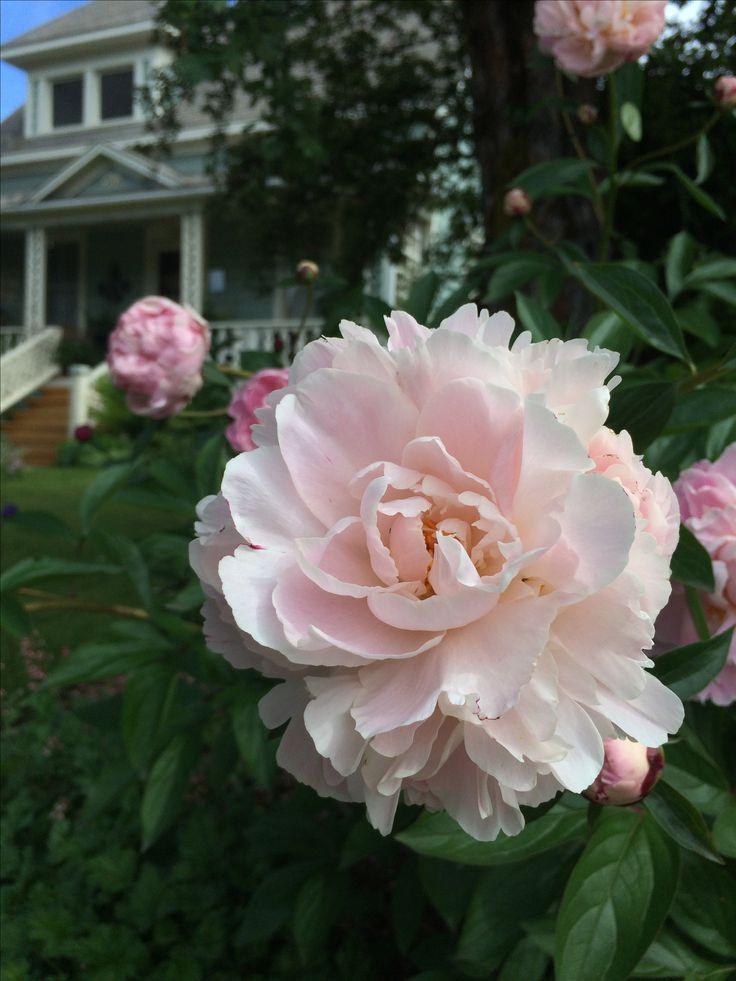 Motel  Cottages  Flowers. 13 best Favorite Places   Spaces images on Pinterest   Motel  Gem