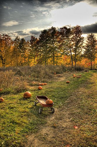 Pumpkin Patch | Flickr - Photo Sharing!