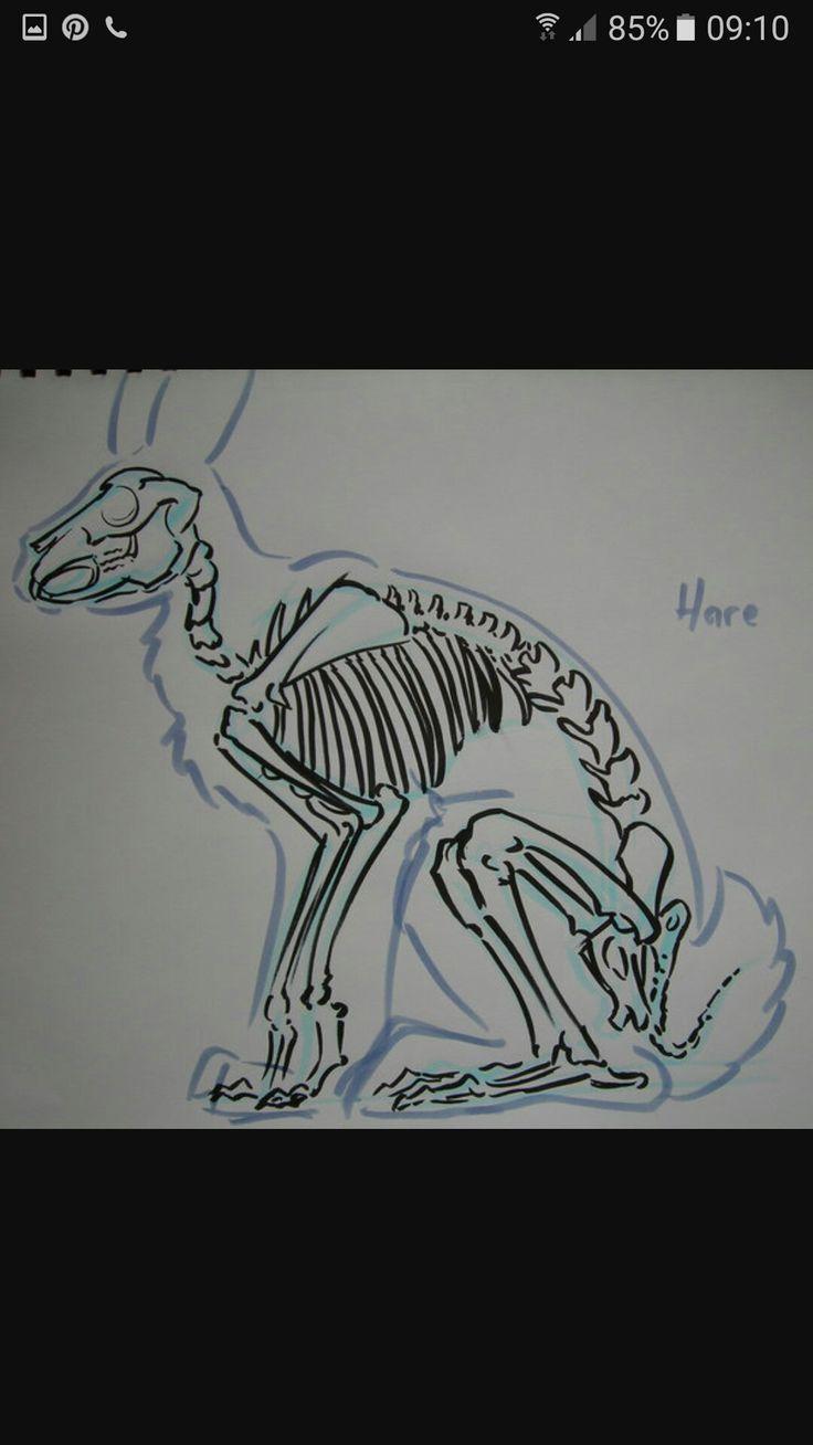 108 besten Anatomy Bilder auf Pinterest   Anatomie, Bull terrier und ...
