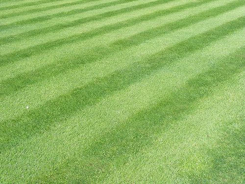 Esta is verde césped como mi campo de fútbol.