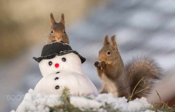 snowman gets visit by Geert Weggen on 500px