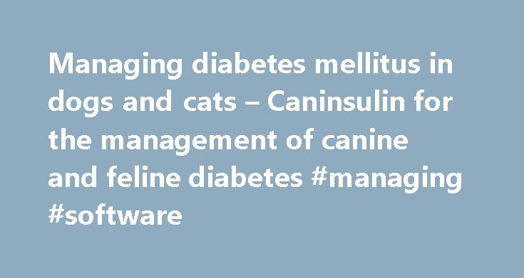 Managing diabetes mellitus in dogs and cats – Caninsulin for the management of canine and feline diabetes #managing #software http://colorado-springs.nef2.com/managing-diabetes-mellitus-in-dogs-and-cats-caninsulin-for-the-management-of-canine-and-feline-diabetes-managing-software/  # Managing Diabetes mellitus in dogs and cats Diabetes mellitus is a common endocrine disease of dogs and cats. Diabetes is caused by a relative or absolute deficiency of insulin. Insulin therapy is the…