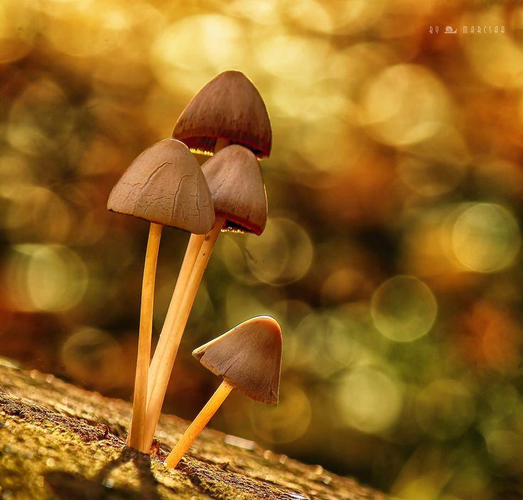 Mushrooms - null