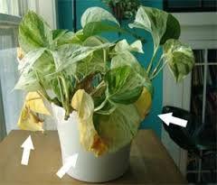 Plus de 1000 id es propos de plantes sur pinterest for Recherche sur les plantes vertes
