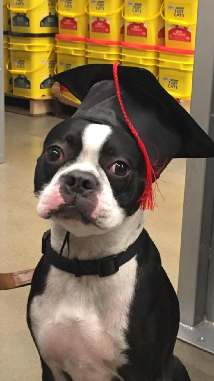 We did it Reddit! Walter graduated from puppy training