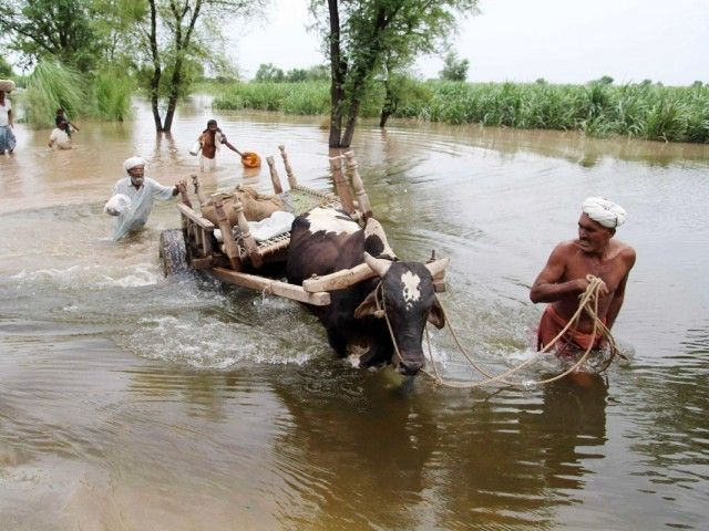 Floods: '150,000 animals have been affected' in Pakistan floods 2013 – The Express Tribune