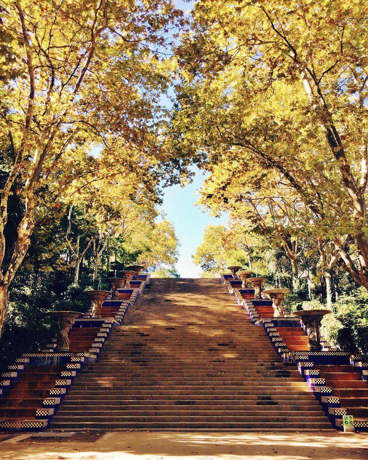 Park in Montjuïc, Barcelona, Spain                                                                                                                                                      Mais