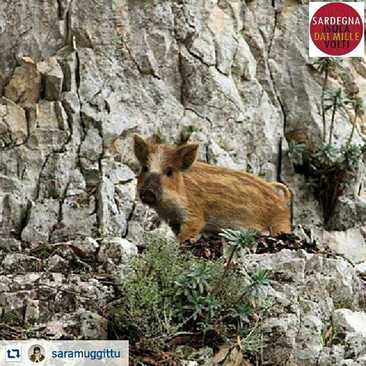 Sardinia landscape: La pagina @Sardegnaisoladaimillevolti Premiazione della giornata La Foto Premiata di oggi è di @saramuggittu  CONGRATULAZIONI Pubblicata anche sulla nostra Pagina di Facebook SARDEGNA:ISOLA DAI MILLE VOLTI Un ringraziamento a tutti gli amici che utilizzano il nostro hashtag #sardegnaisoladaimillevolti #sardegnaisolafb - via http://ift.tt/1zN1qff e #traveloffers #holiday | offerte di turismo in Sardegna: http://ift.tt/23nmf3B -