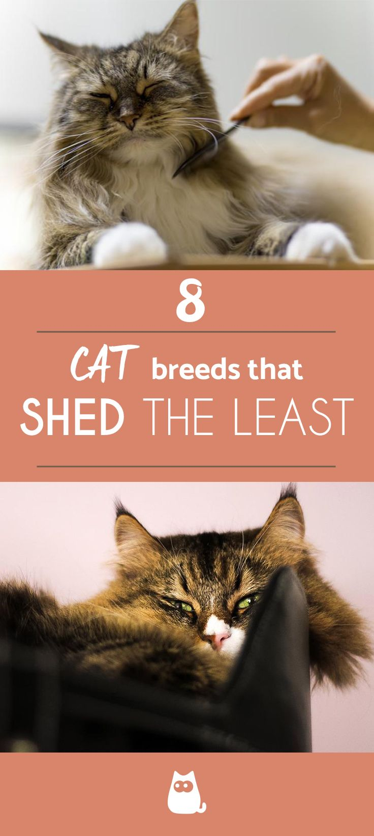 8 Cat Breeds That Shed The Least Cat breeds, Cat