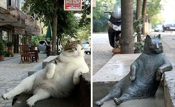 Istanbul's Most Famous Cat Honored With Its Own Statue At Its Favorite Spot. Tombili the cat passed away recently but it will never be forgotten