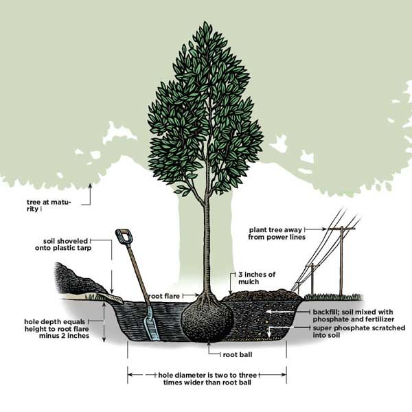 34 best steps on slopes images on pinterest exterior stairs backyard ideas and garden ideas - Fir tree planting instructions a vigorous garden ...