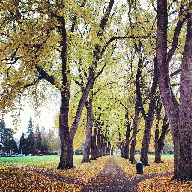 Oregon State University in Corvallis, Oregon.