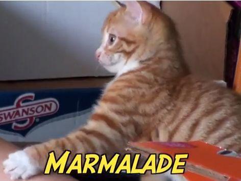 Da haben sich die Besitzer des kleinen Marmalade vielleicht jemanden ins Haus geholt — ihr Jungspund ist immer gut drauf und hat tierisch viele Flausen im Kopf. Und was mach ...