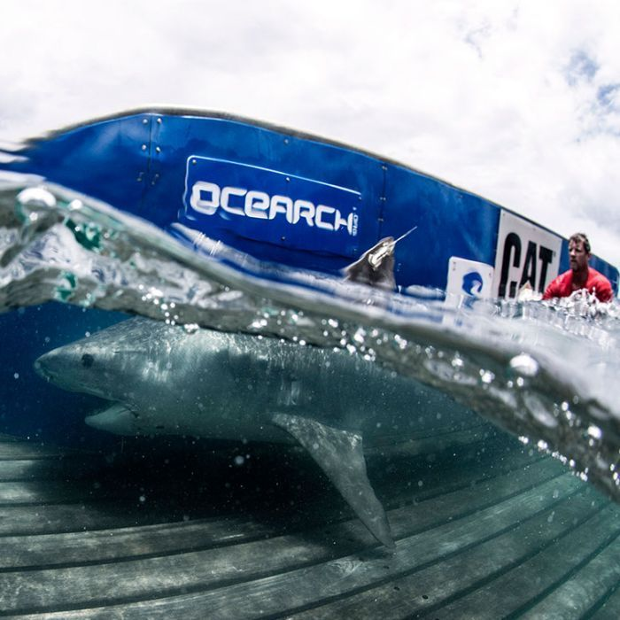 17 Best Images About OCEARCH On Pinterest