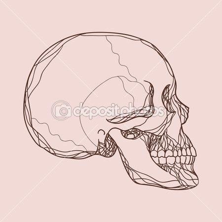 czaszka profil - Szukaj w Google