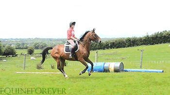 funny (8) horse gif | Tumblr