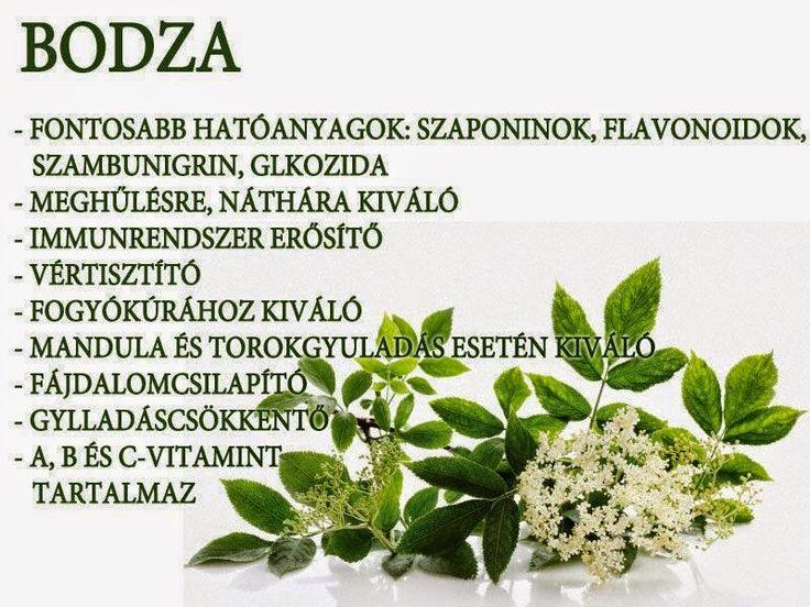 Kuponoldalak Közösségi oldala: Bodza
