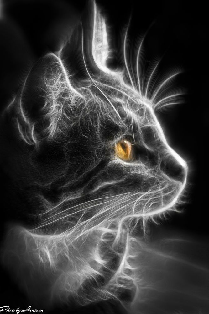 Sara the fractal cat by PhotobyArntsen
