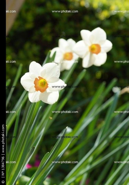http://www.photaki.com/picture-cheerful-spring_1384796.htm