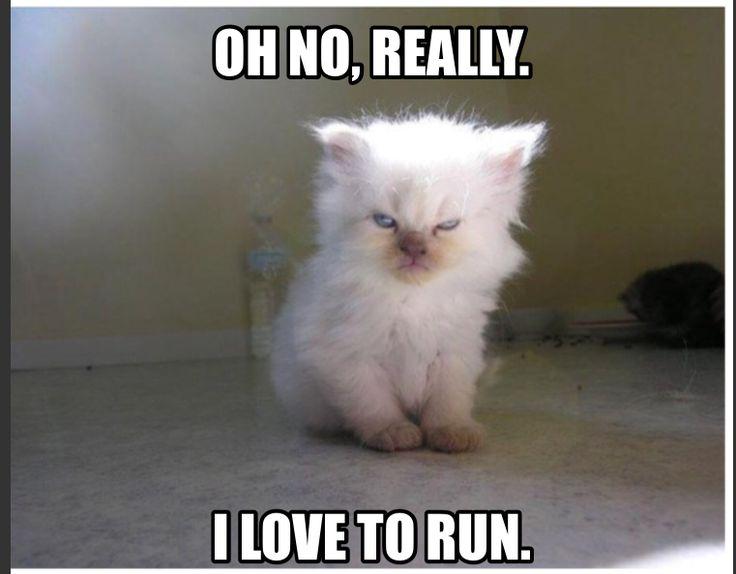 Fitness, funny fitness meme, angry cat, I hate running, I love running