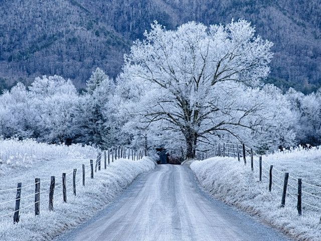 Image result for frost in the great smoky mountains