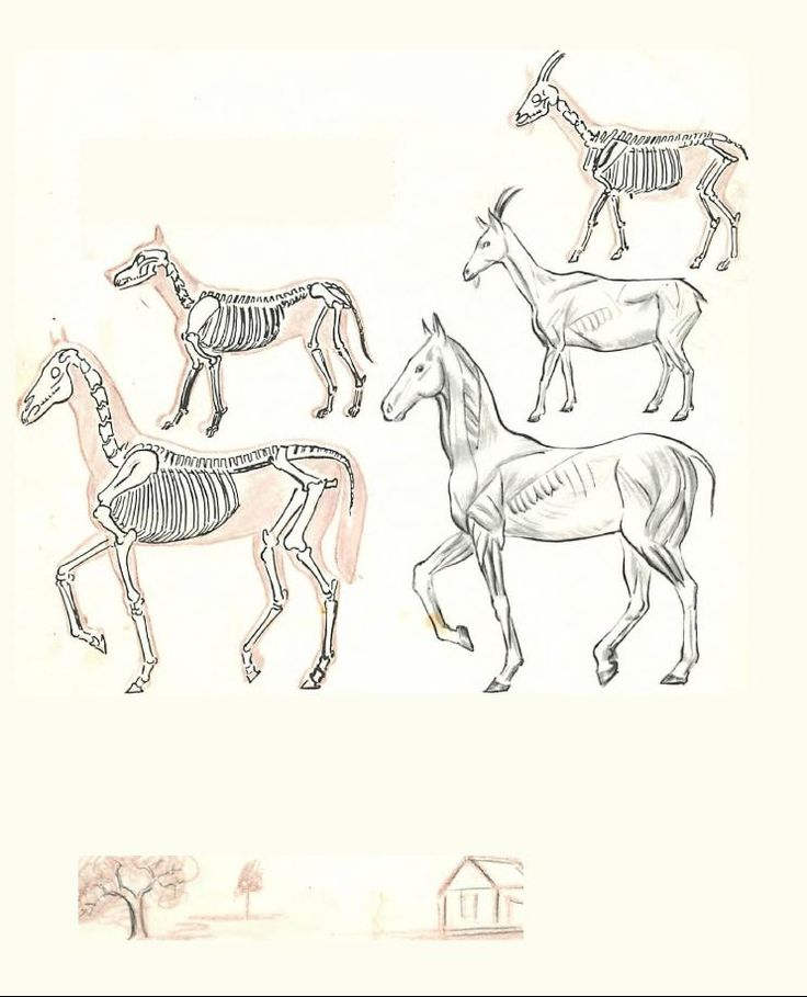 A study of the human body and figure with the following drawing lessons of the human body, head, face, facial features and body proportions of children, women, and adults.