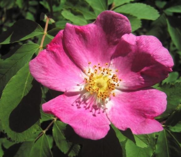 wild rose single men Wild rose jewish single men adult dating with naughty people.