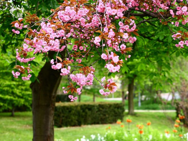 blooming garden flowers nature background wallpapers on - Garden Flowers Wallpaper
